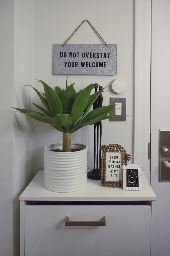 green plant on wooden surface bedside photographs