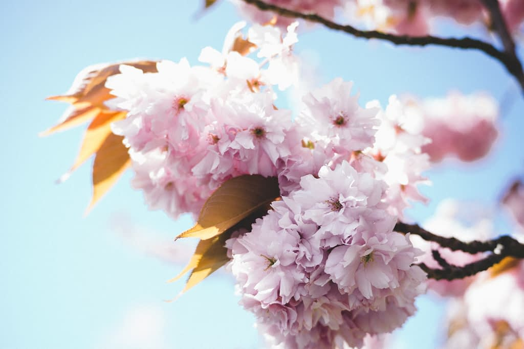 pink and white flowers under blue sky